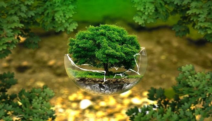 Aprende a llevar una vida ecológica desde casa
